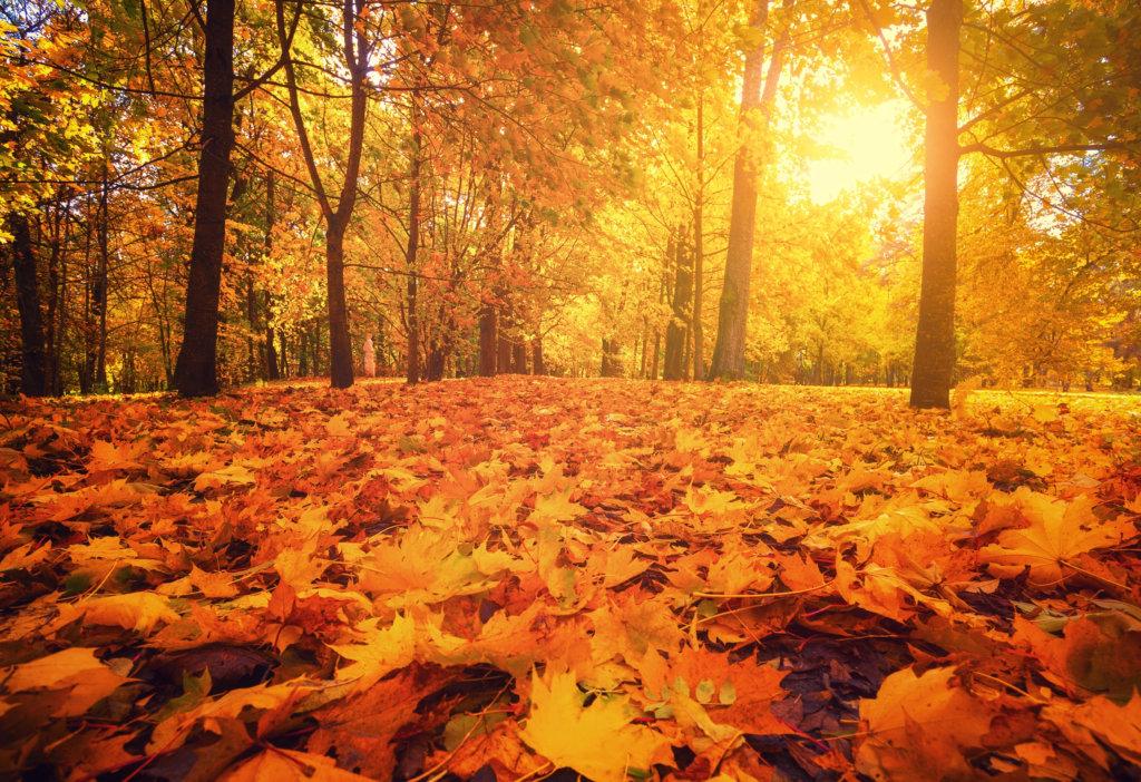 Autumn walks on the Celtic routes