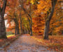 Beautiful Autumn walks on the Celtic routes