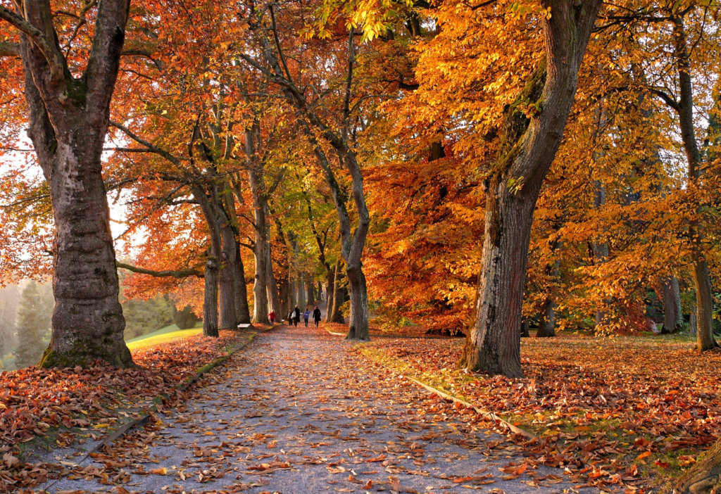 Incredible Autumn walks on the Celtic routes