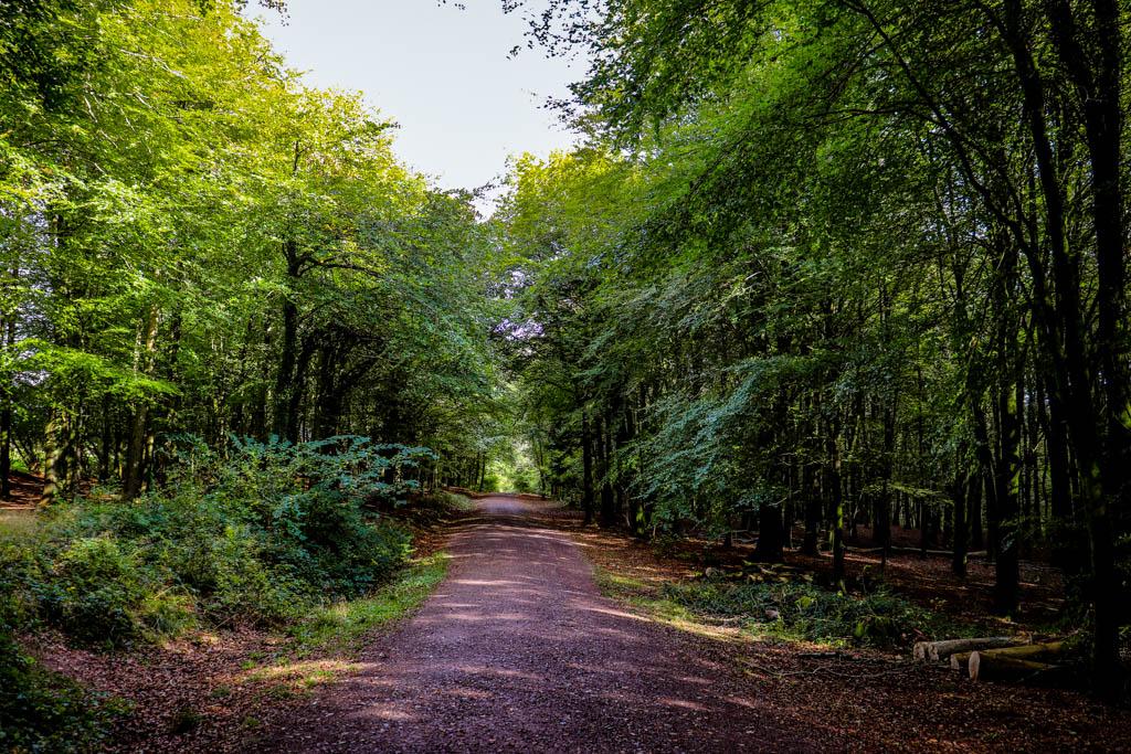 Fforest Fawr trails Cardiff