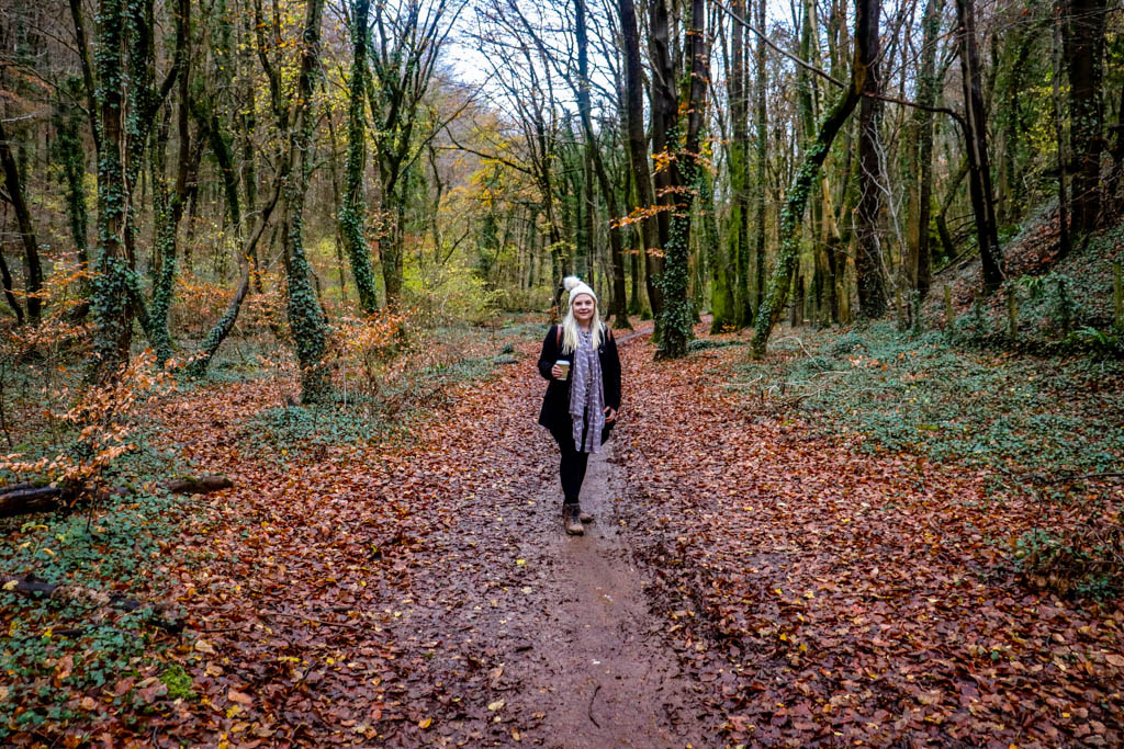Forest walks in Cardiff - Forest Fawr